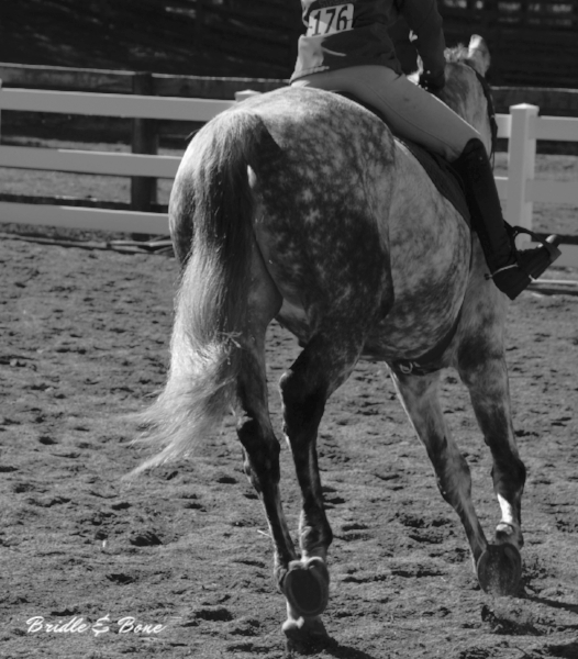 Horses are beauty in motion.