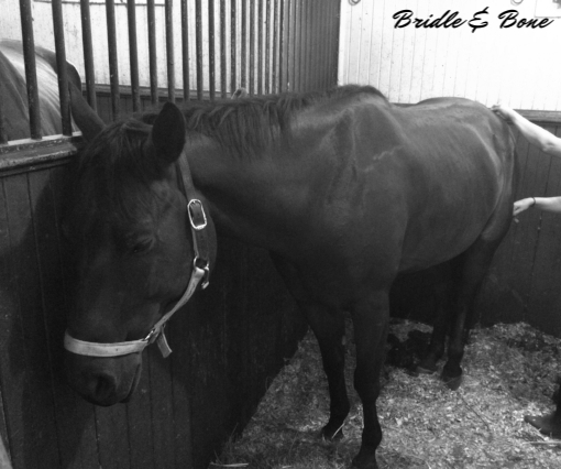 Horses that are in rehabilitation benefit from the anaerobic capacity of sports massage as wells as increased circulation and removal of toxins to aid healing.