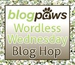 This is my contribution to the blog hop. Click the image above to read the other pet blogs!