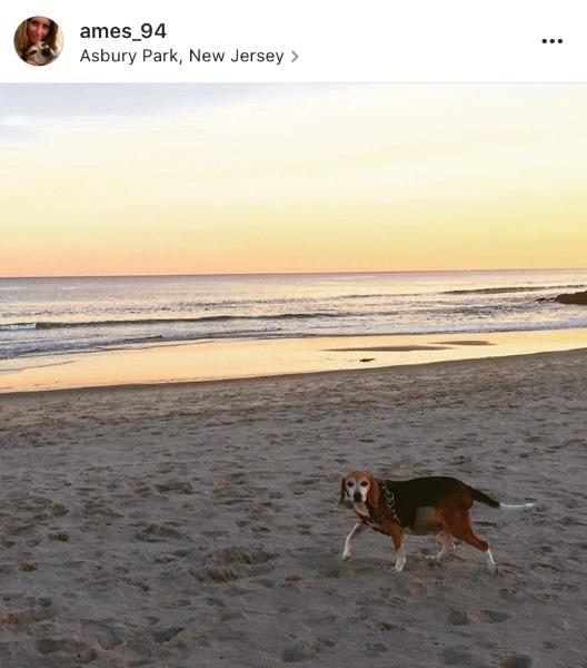 Beach days are the best days to Jaxson the Beagle.