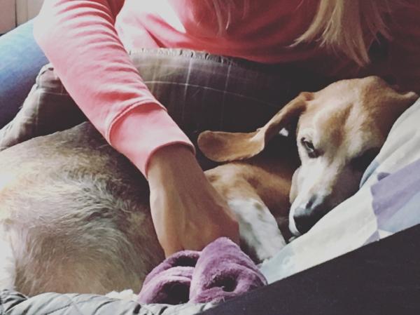 A final canine massage for Jaxson.