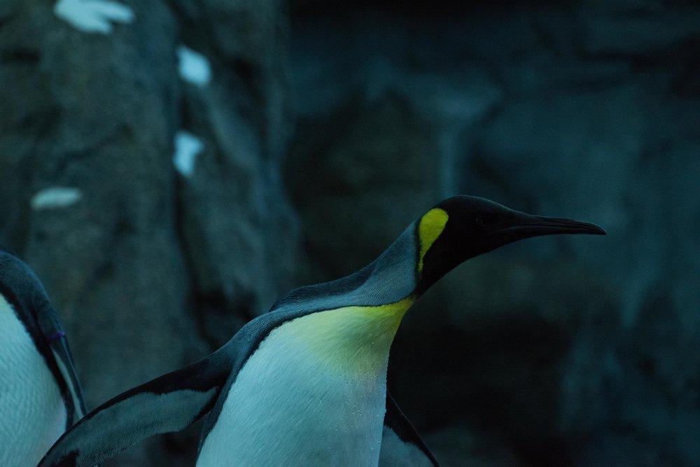 calgary zoo-3252.jpg