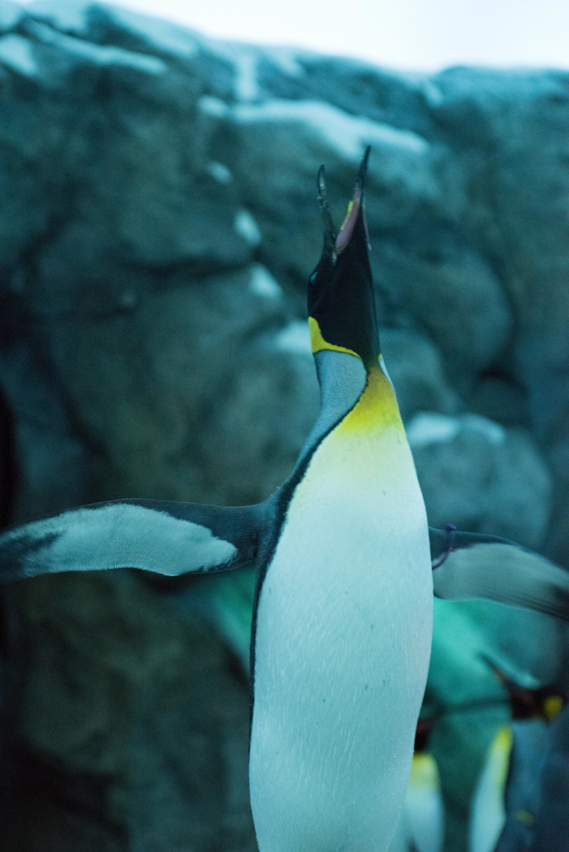 calgary zoo-3260.jpg