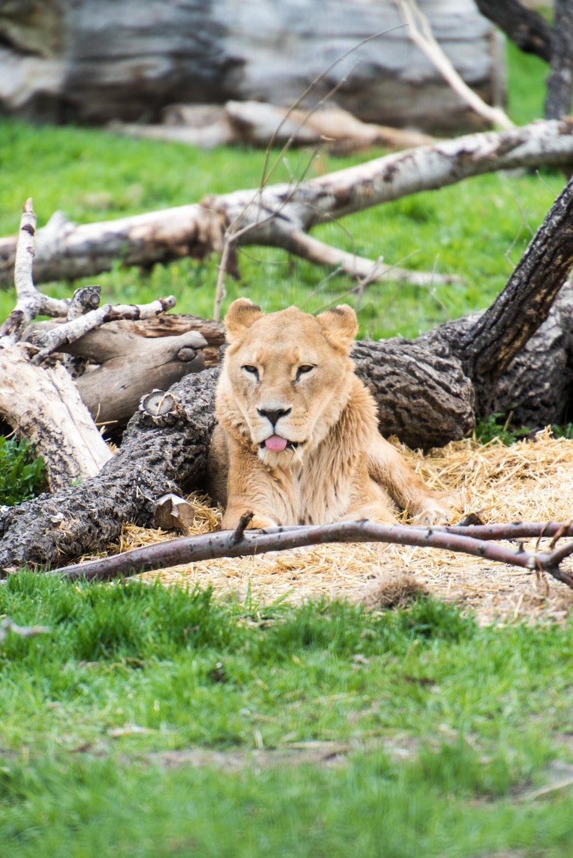 calgary zoo-3632.jpg