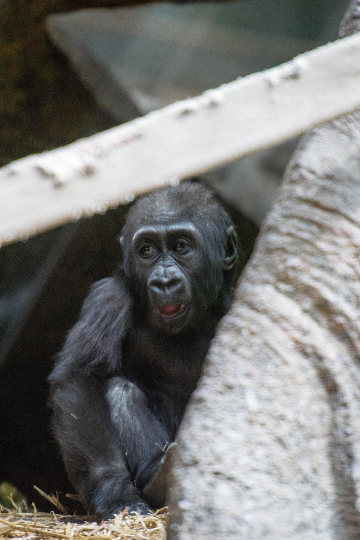 calgary zoo-3690.jpg