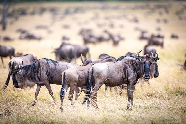Got off the plane in the Maasai Mara and already loving every single photo