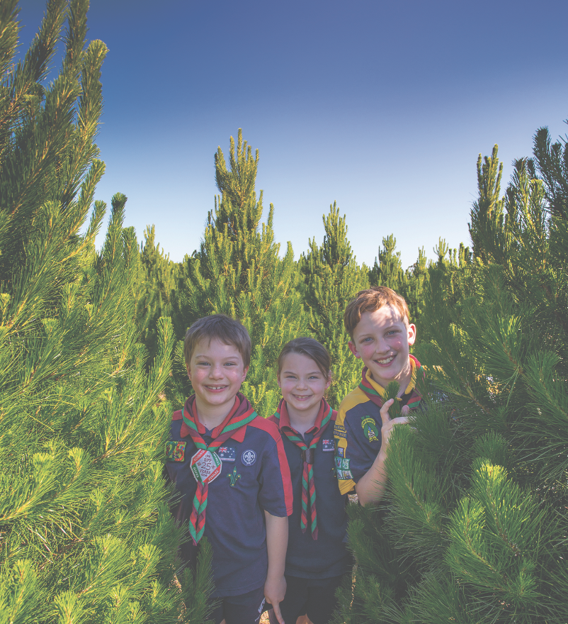 Ben and twins Abrielle and Micha inspect some of the trees the Baden Powell Park Scout Group will be selling this year.