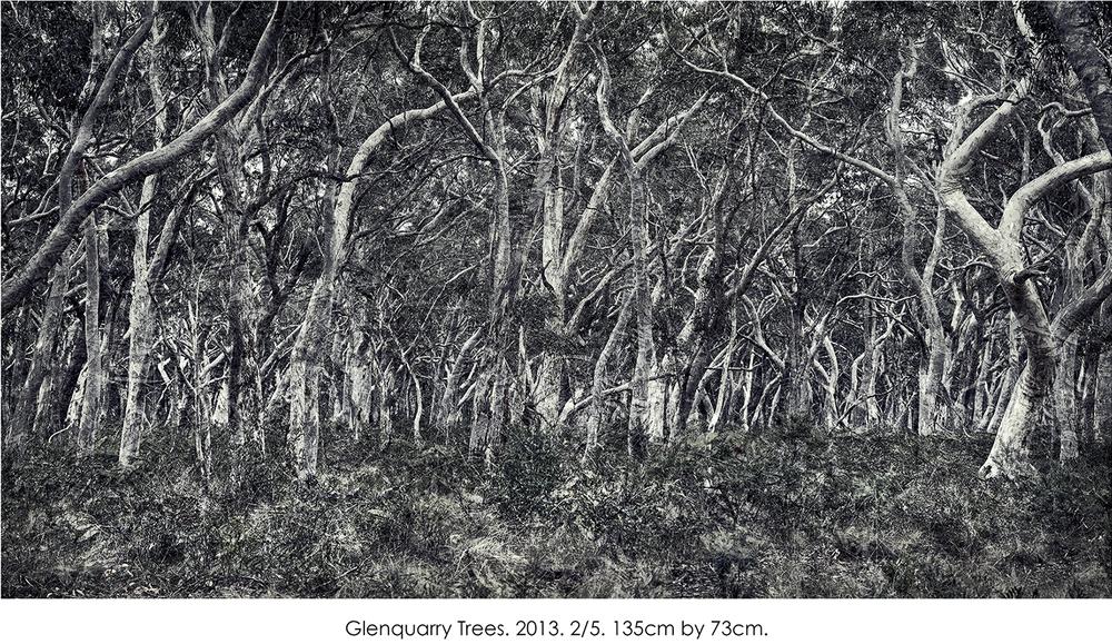 Glenquarry Trees.jpg