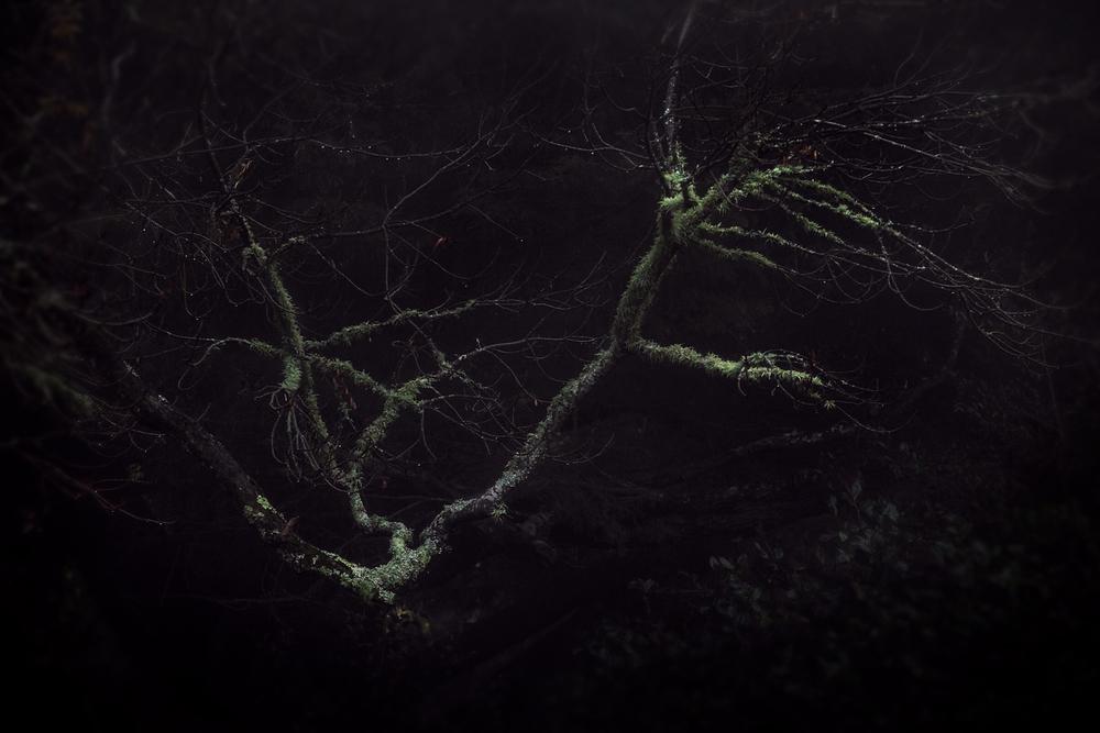 Tree-study-7.jpg