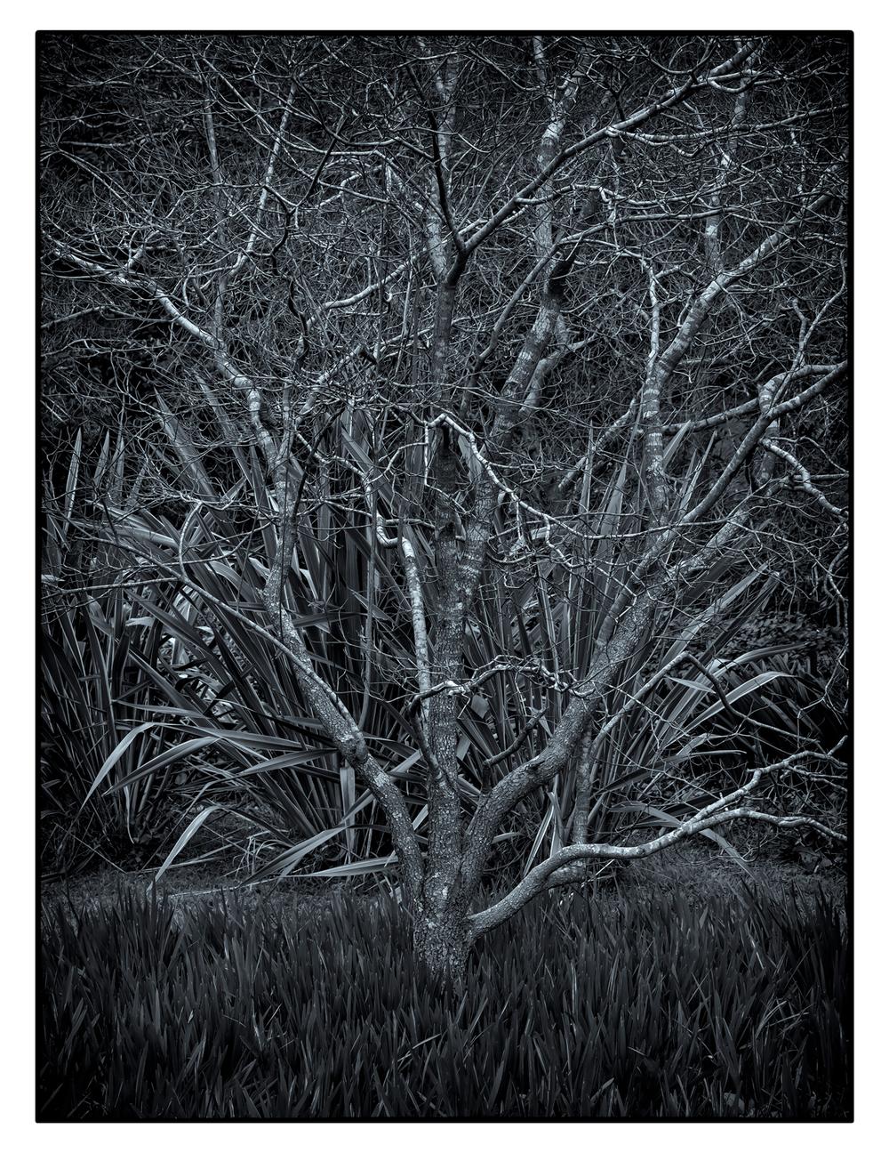 tree-2.3.jpg