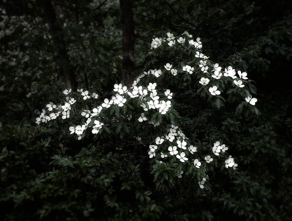 flowers-Edit.jpg