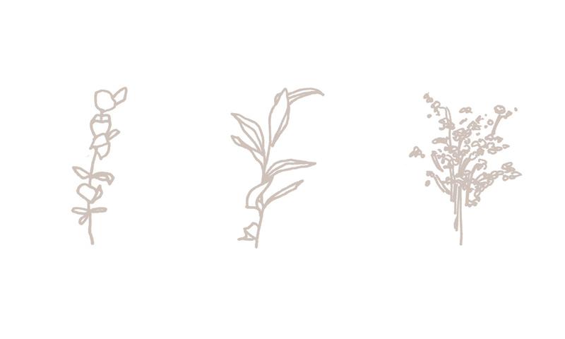 hlimphotobranding_botanicalillustration.jpg