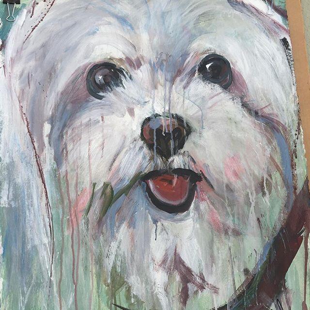 Julie Arnoff - Maltese Puppy.jpg