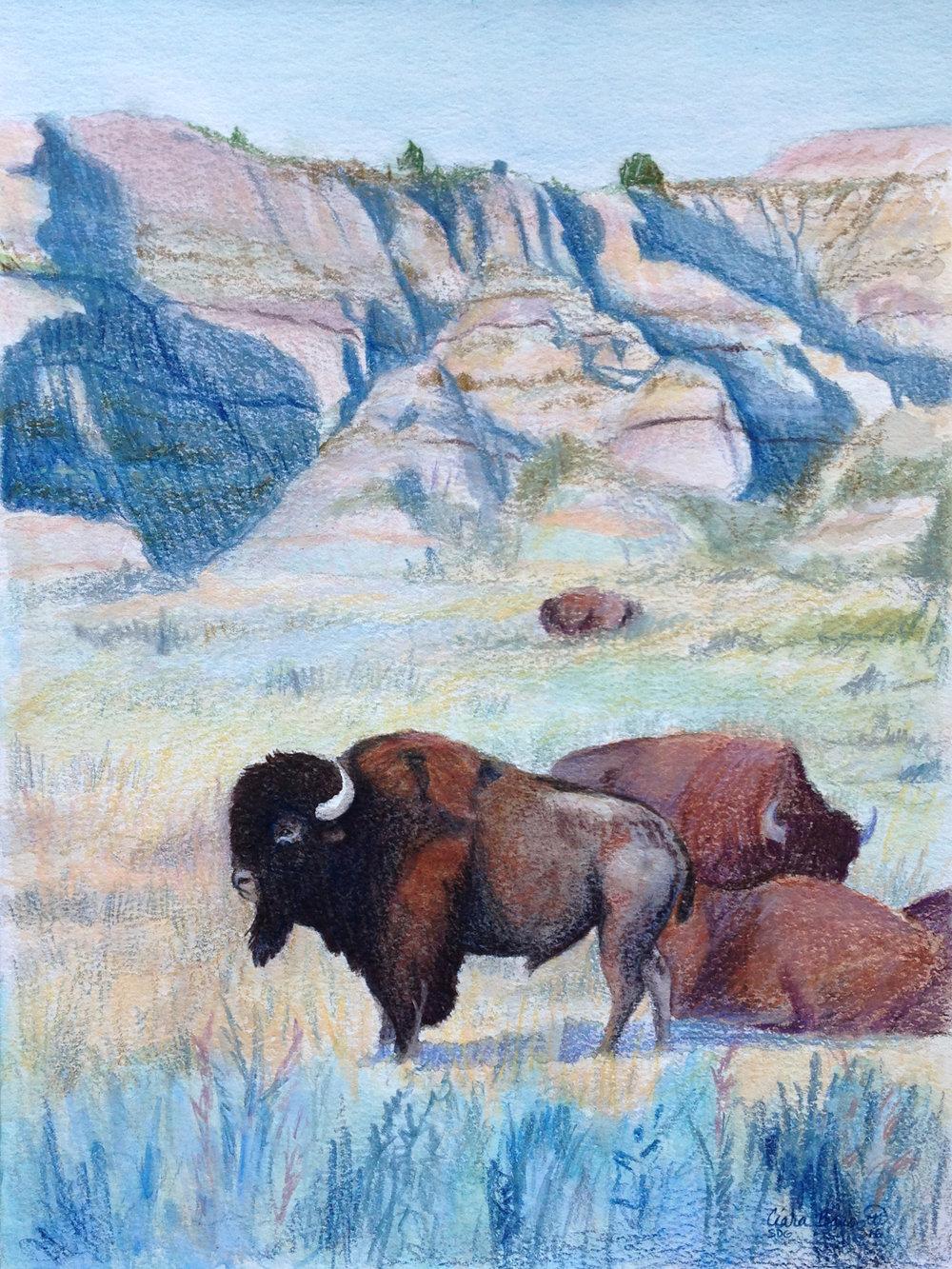 Buffalo Bluffs