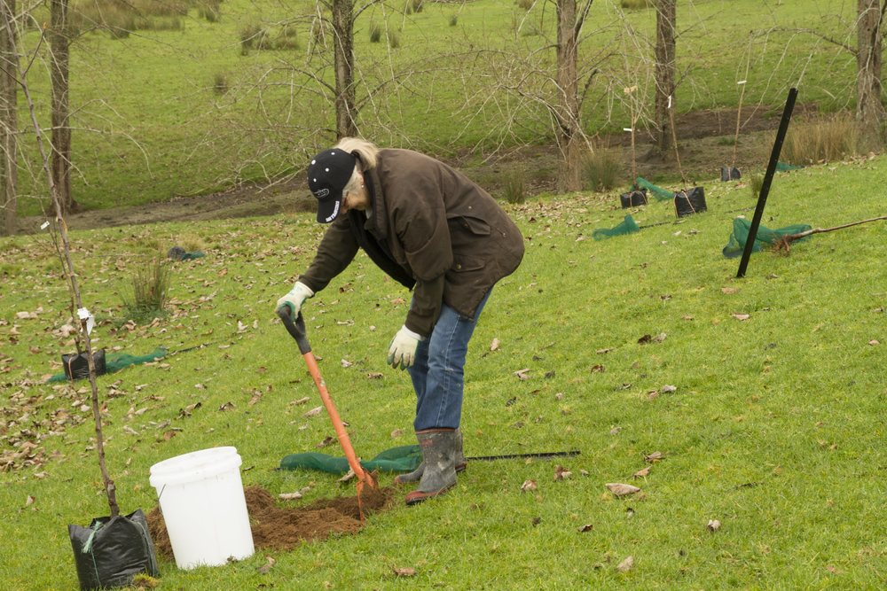 orchard planting-100.jpg
