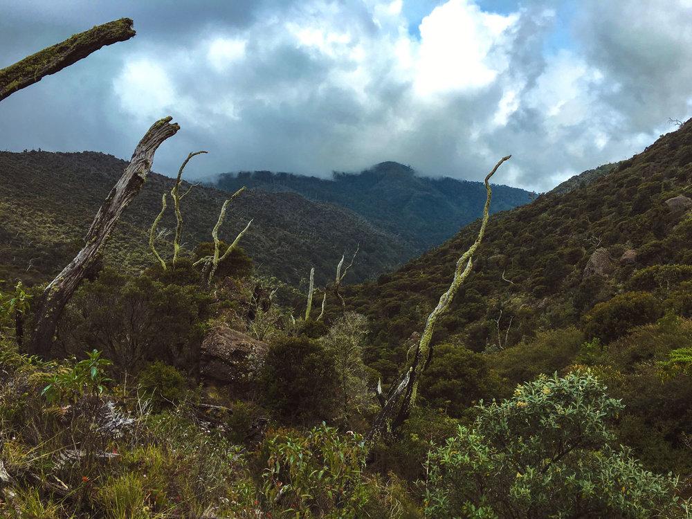 cerro-chiripo-costa-rica-wander-south-23.jpg