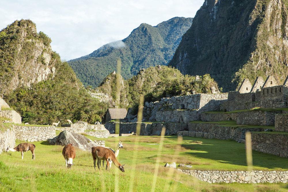 Machu-Picchu-Peru-wander-south-aguas-calientes-llamas-citadel.jpg