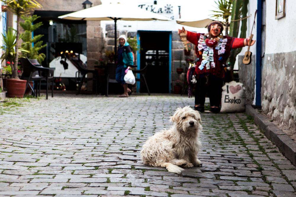 Cusco-Peru-wander-south-street-dog.jpg