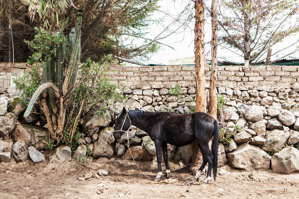 colca-canyon-peru-wander-south-hike-horse.jpg