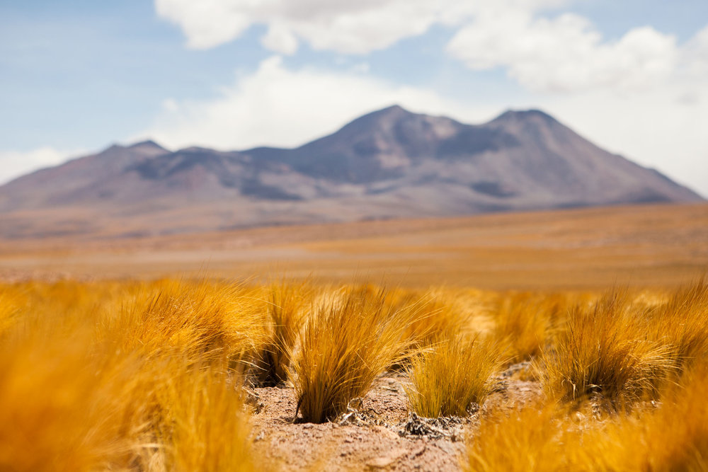 atacama-desert-chile-wander-south-random-2.jpg