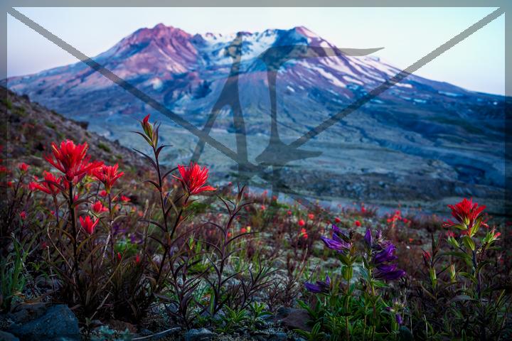 Johnston ridge - June 2018: Mount Saint Helens, WA