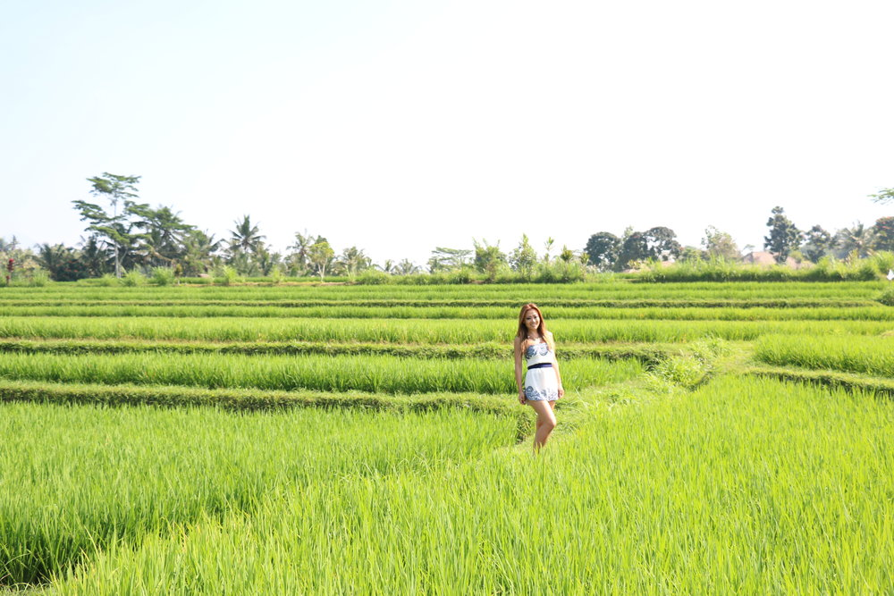 Rice Paddies in Ubud