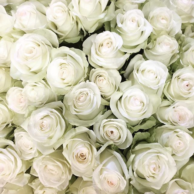 Dreamy white roses 👌🏽 #flowersinbloom #gifts #flowershop #realflorists #roses #perth #fremantle #attadale #applecross