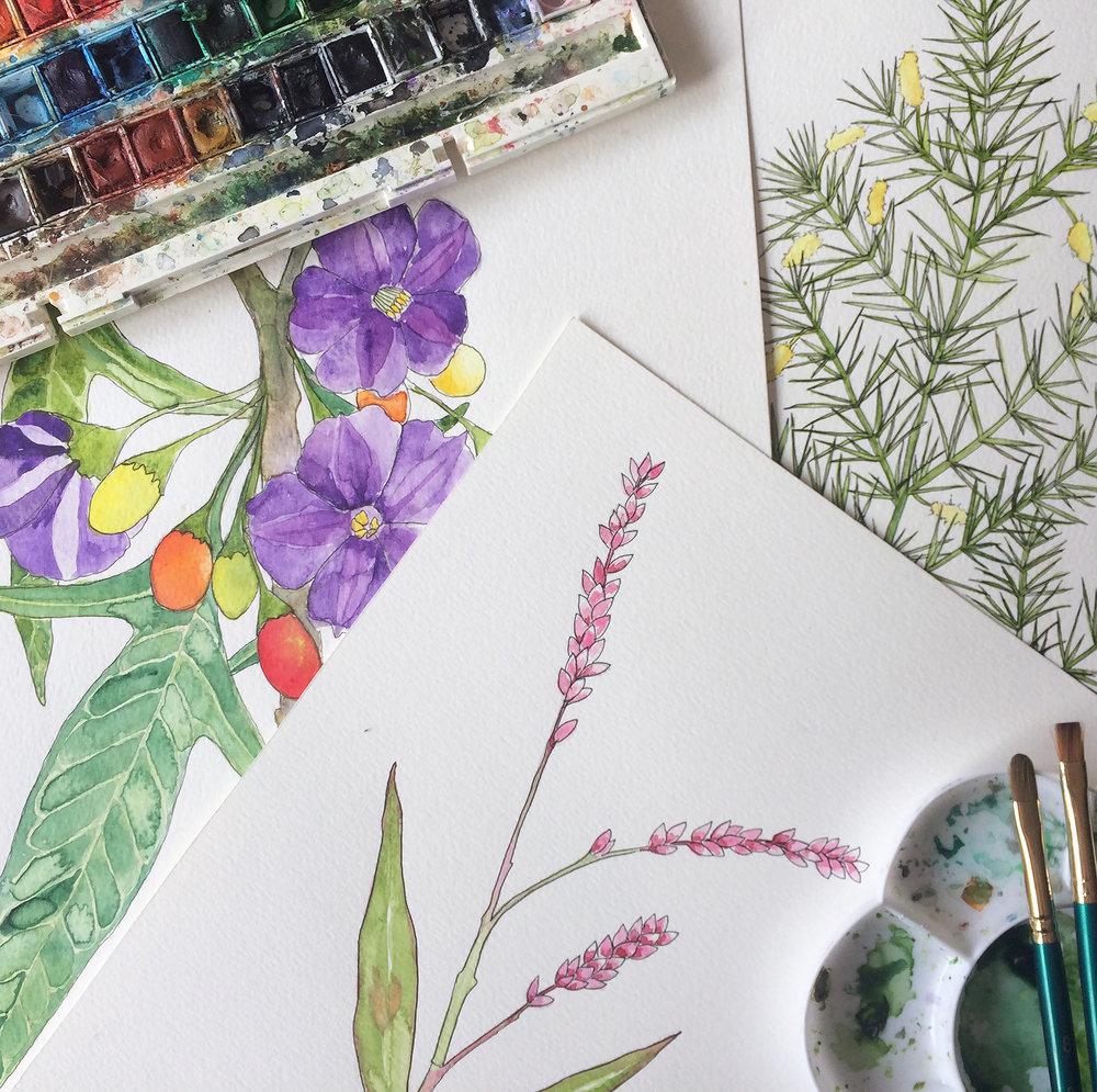 Indigenous Flora Watercolour Workshop -