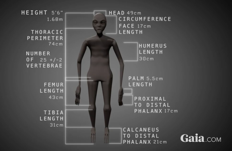 Fig 5: Gaia.com size chart for Nazca mummy.