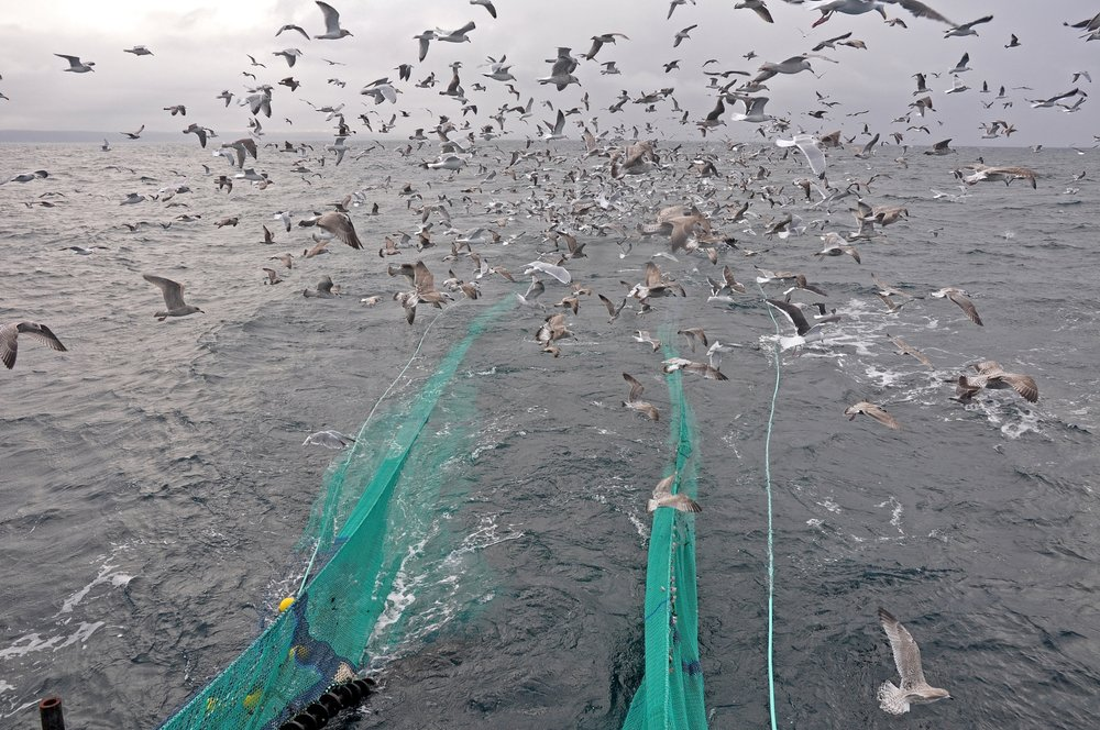 Fishing Boat Nets gulls.jpg