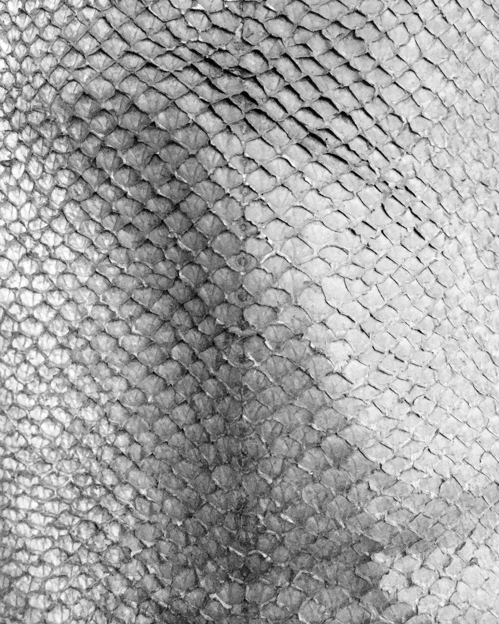 aitch-aitch-salmon-skin.jpg