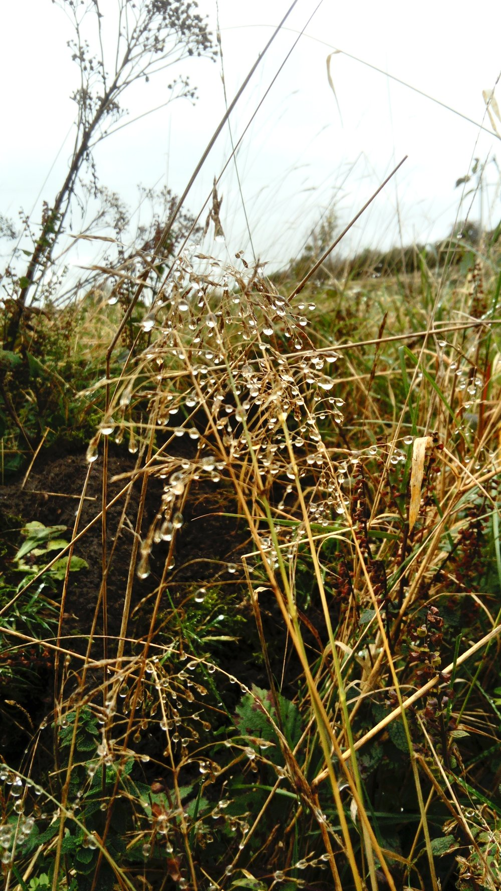 Dew drops that looked like crystals - taken by Donna on one of our Mindful Walks