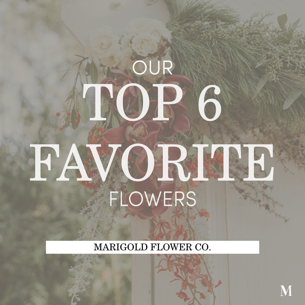 Our Top 6 Favorite Flowers_Cover.jpg