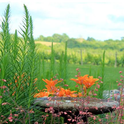 lilies+birdbath.jpg