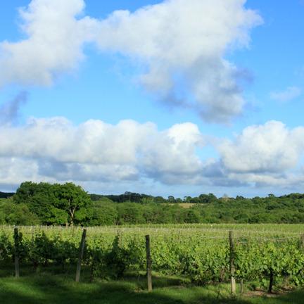 clouds+vineyard.jpg