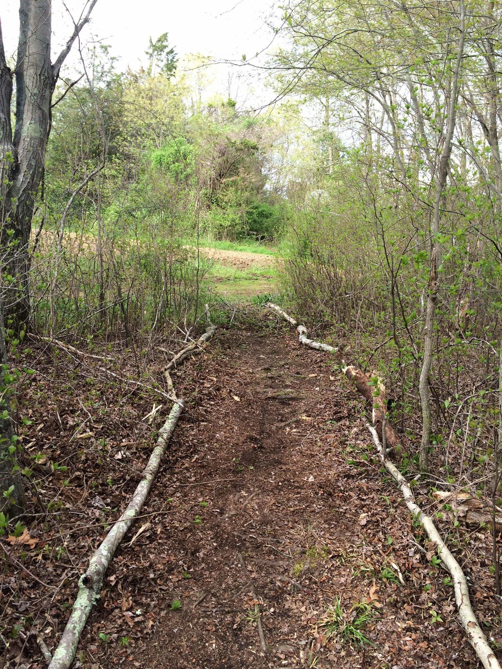 Eagle Service Project, Trail Entrance from Farm Field.JPG