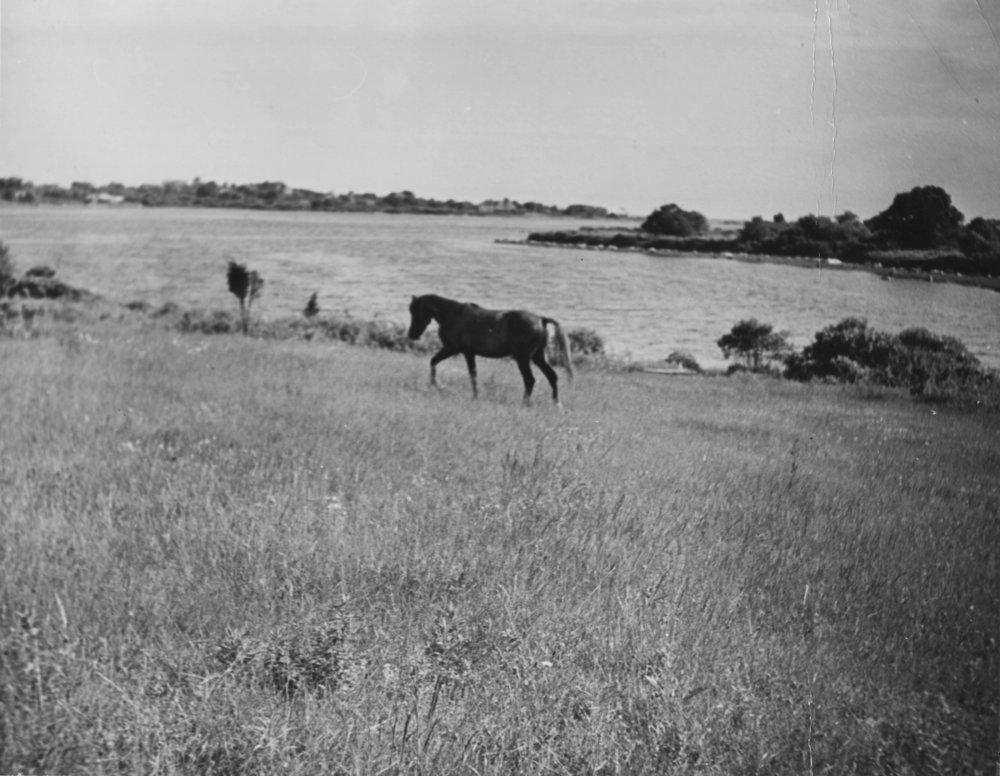 Whit's Horse Blaze on Davis Farm Cove 1941 copy.jpg