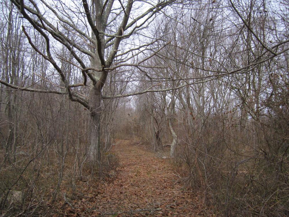 Davis Farm Woodland, Early Winter-2013 #63.jpg