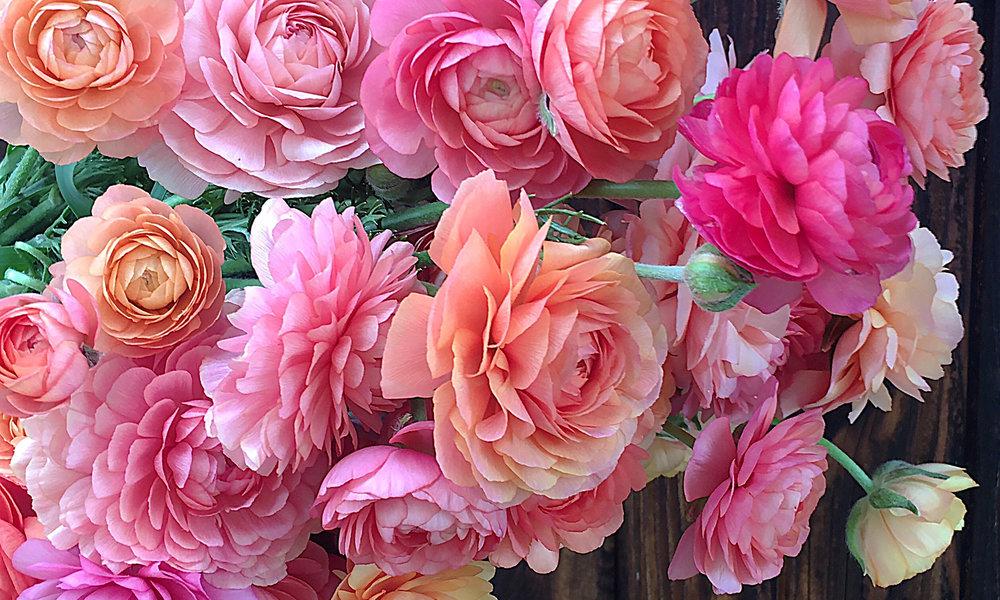 ranunculus_localflowers.jpg