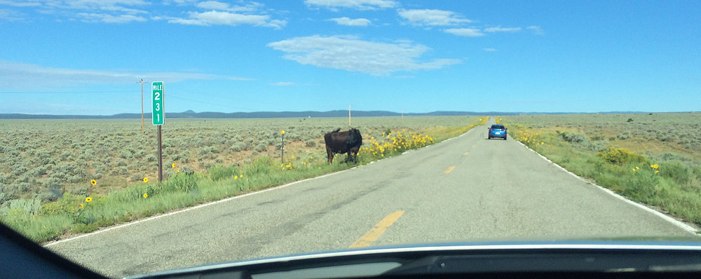 road-cow.jpg