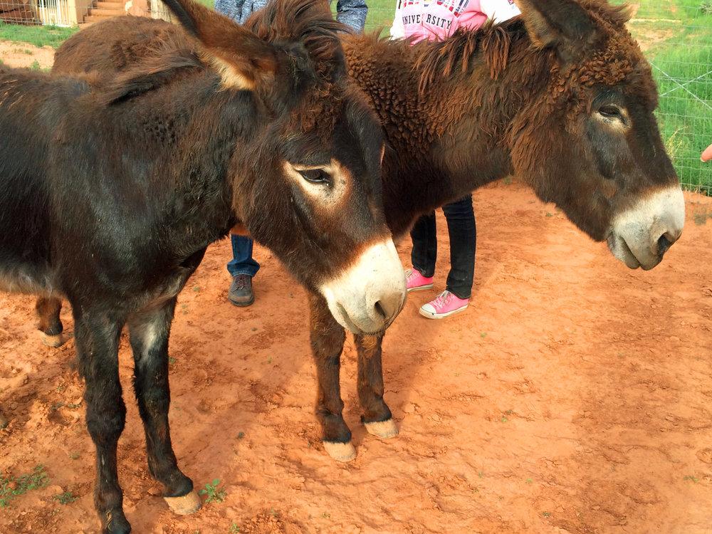 Donkey hosts.jpg