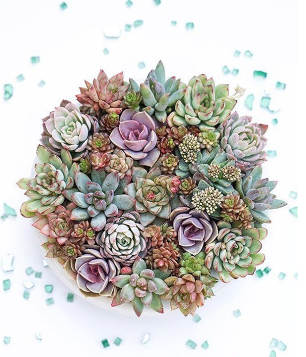 Montecito Country Mart are hosting a pop-up show demonstrating how to create this beautiful vertical succulent circle [May 13th, Saturday 1:30]