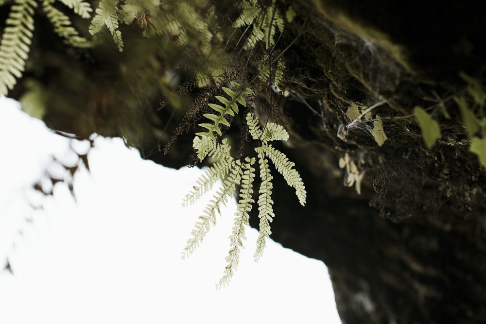 columbia-river-gorge-wahclella-falls-engagement-photos-hanging-greenery