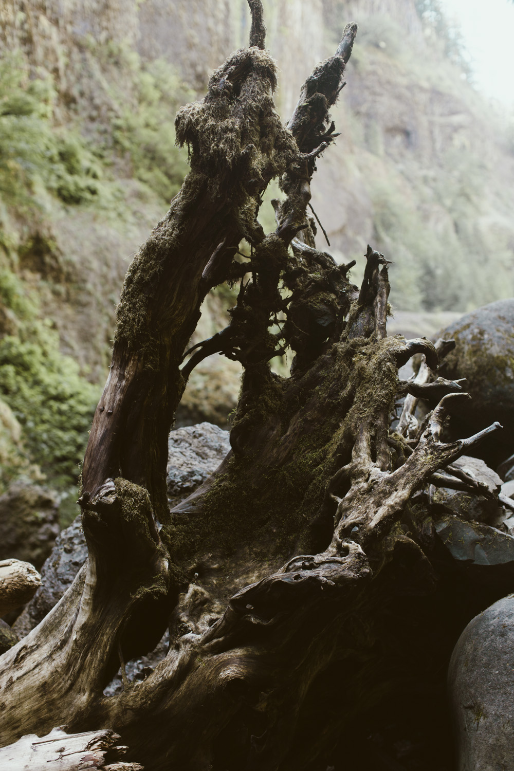 columbia-river-gorge-wahclella-falls-engagement-photos-tree-stump