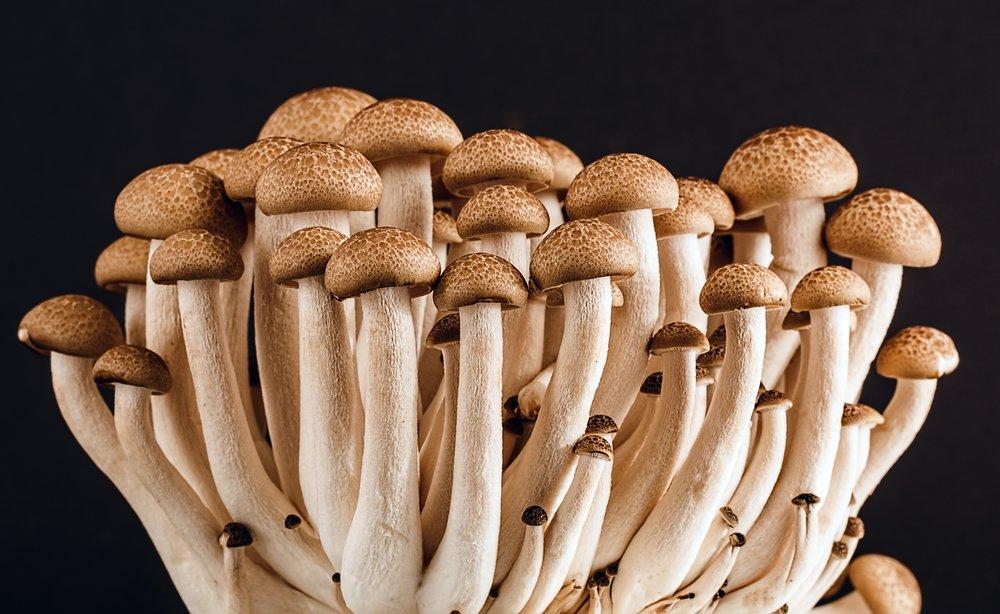 boletus-champignon-delicious-53494.jpg