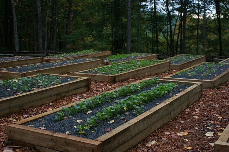 raised-beds.jpg