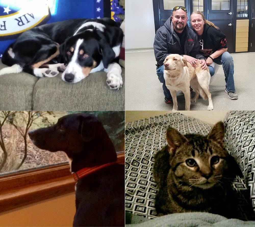 Top Right - Leland | Top Left - Maggie | Bottom Right - Jasper | Bottom Left - Leroy