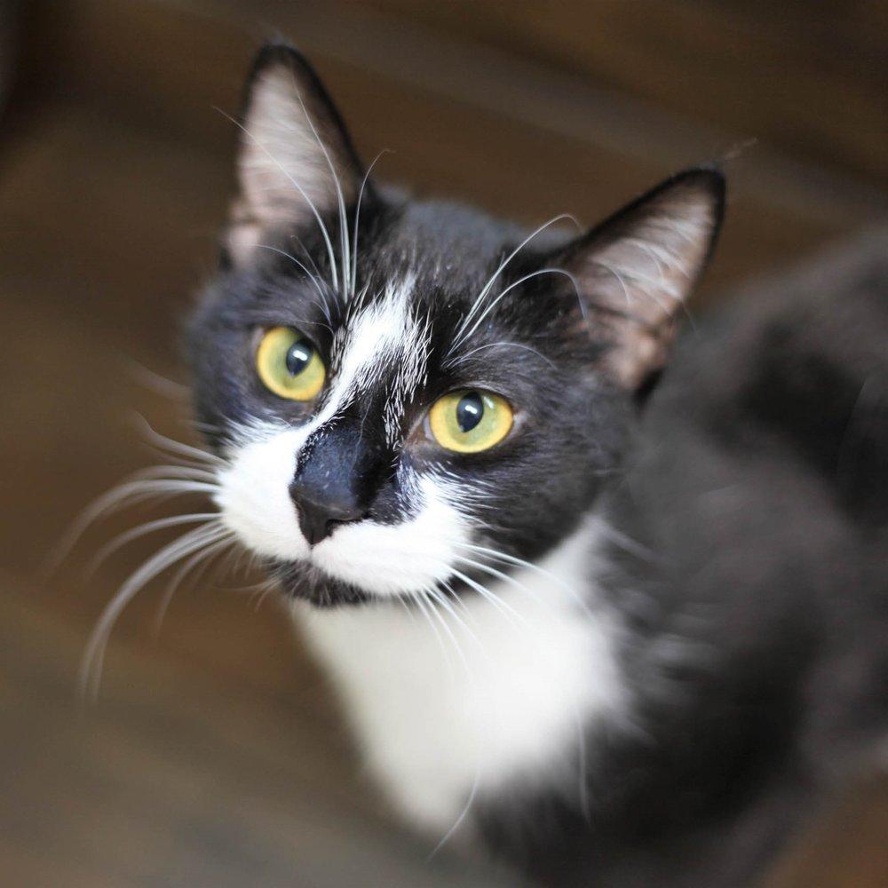 Adoption Survey for Cats -