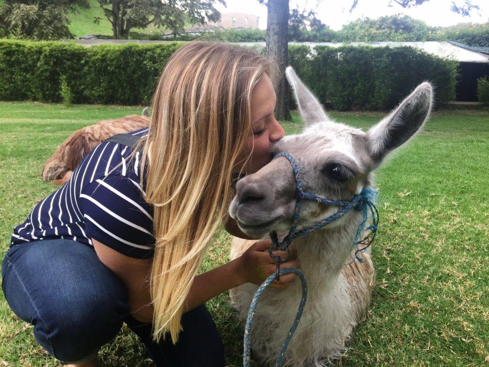 Ecuador volunteers, with a llama