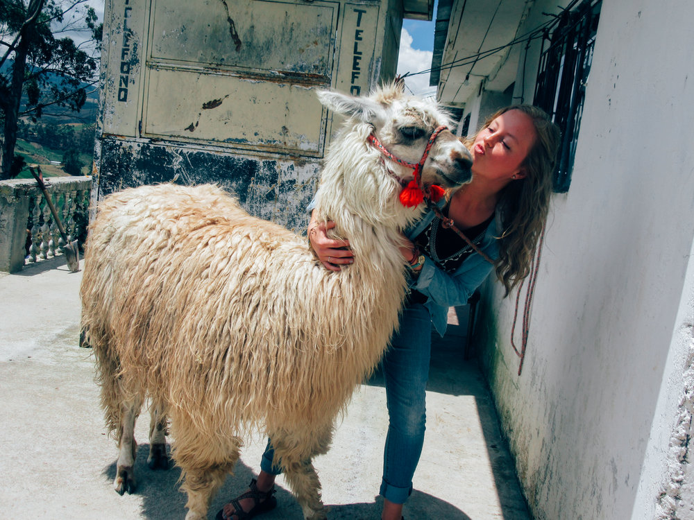 Play with llamas when you travel with Orphanage Support Services Organization to Ecuador.